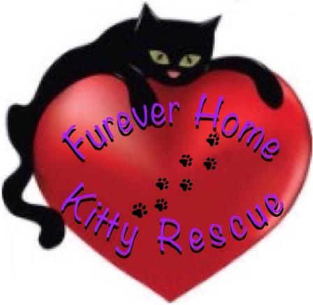 Furever Home Kitty Rescue