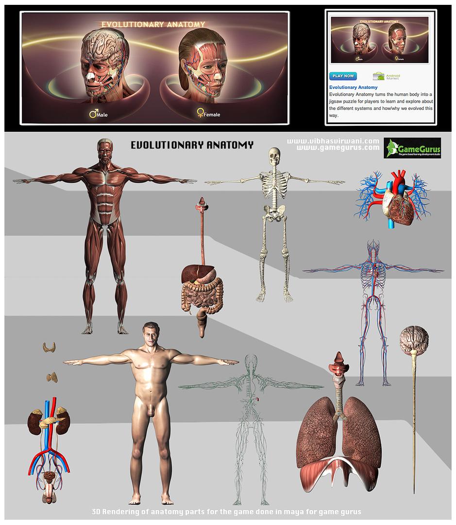 Anatomy Body Parts Game Images - human body anatomy