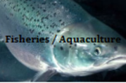Fisheries and Aquaculture news and feature stories