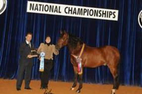 Sheri winning National Champion Gelding with Brillante RDL