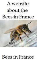 Bees-in-France