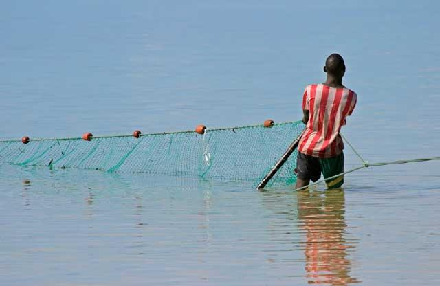 Mozambican fisherman hauling in a long seine net