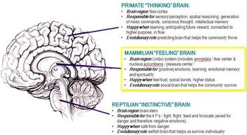 more info about the Triune Brain