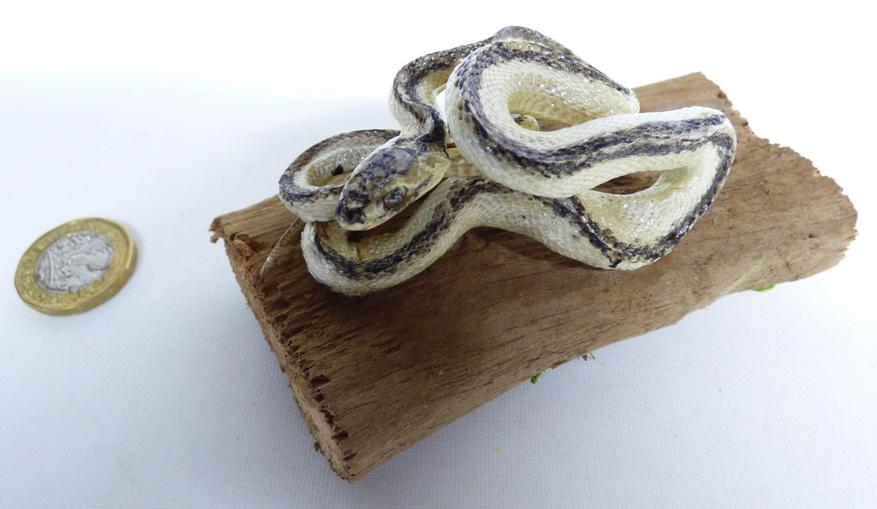 Adrian Johnstone, professional Taxidermist since 1981. Supplier to private collectors, schools, museums, businesses, and the entertainment world. Taxidermy is highly collectable. A taxidermy stuffed White And Black Snake (606) in excellent condition. Mobile: 07745 399515 Email: adrianjohnstone@btinternet.com
