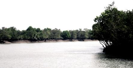 The Narrow Creeks Of Sundarbans