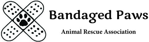 Image result for BANDAGED PAWS