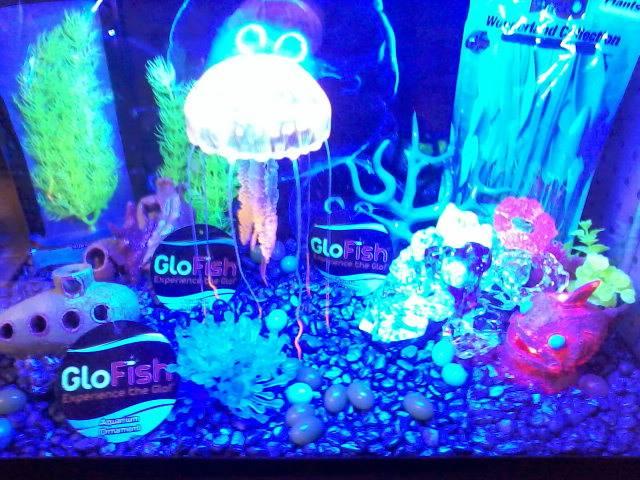 Pet Store - Steve's Tropical Fish & Pet Supply - Oakhurst, Ca