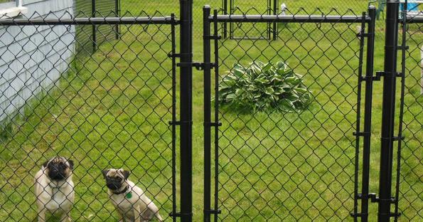Quality Pet Fencing Services and Cost in Edinburg McAllen | Handyman Services of McAllen