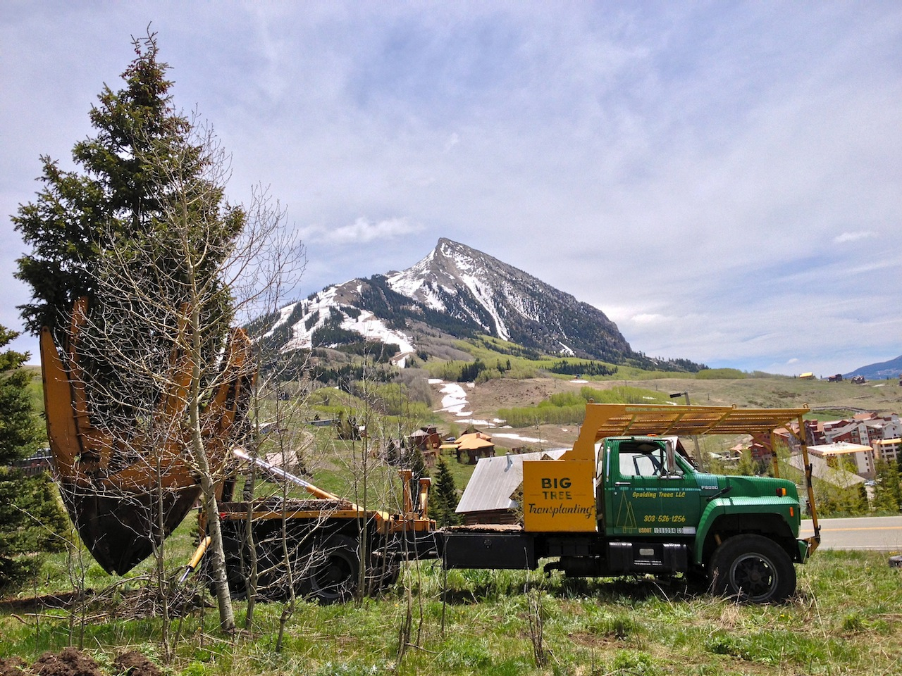Spalding Trees LLC - A large tree moving company in Denver, CO