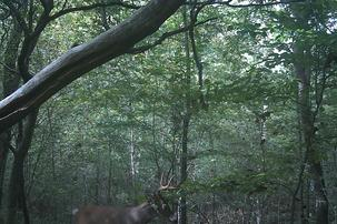 big bucks in the bluegrass state