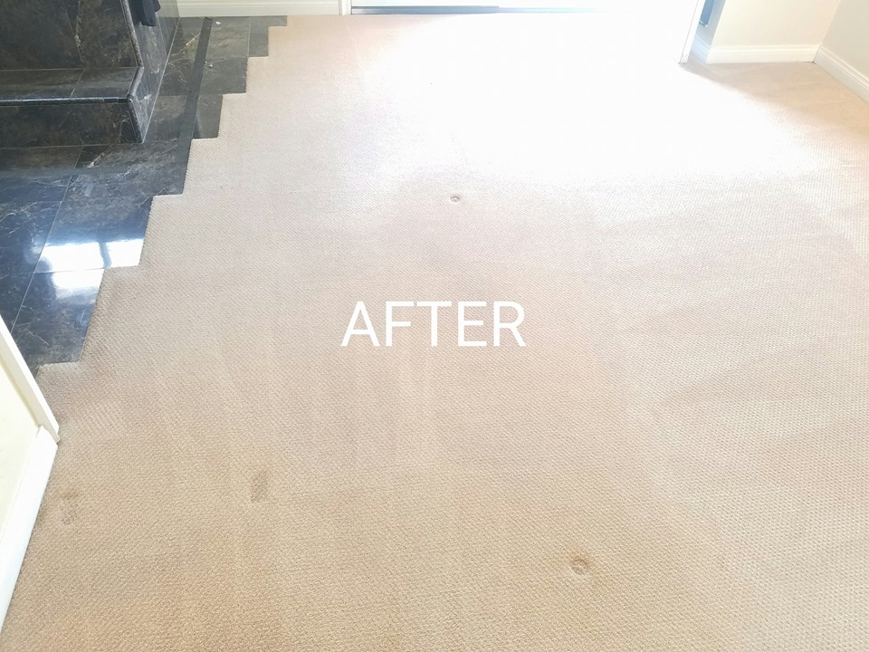 Noticeable clean! All Carpet Cleaning is ...