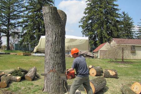 Professional Tree Removal in Lincoln NE | LNK Junk Removal