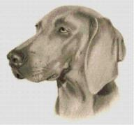 Cross Stitch Chart of a Weimaraner original artwork by Nick Clark