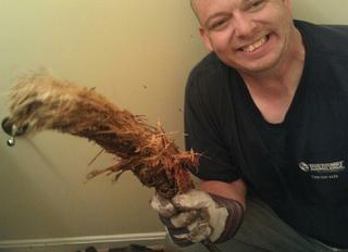 Roots pulled from main sewer line clog