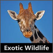 Exotic Wildlife