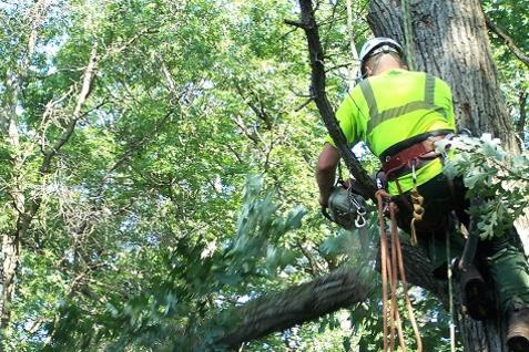 CHEAP TREE MANAGEMENT SERVICES LAS VEGAS NV