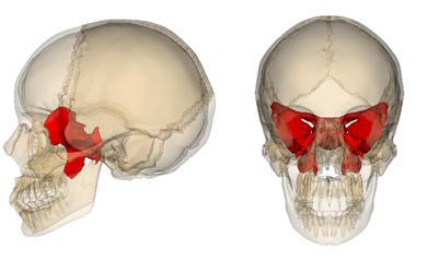 ncr® anatomy, Human Body