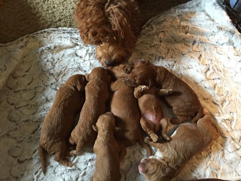 in home family breeder