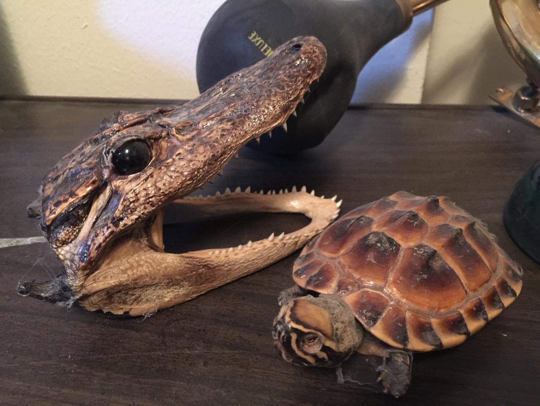 Warning turtles amp tortoises inc - Warning Turtles Amp Tortoises Inc 40
