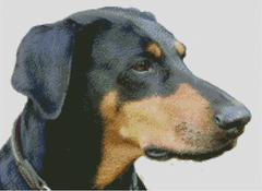 Cross Stitch Chart of a Doberman