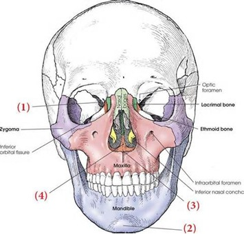 the beautiful side of ncr®, Sphenoid