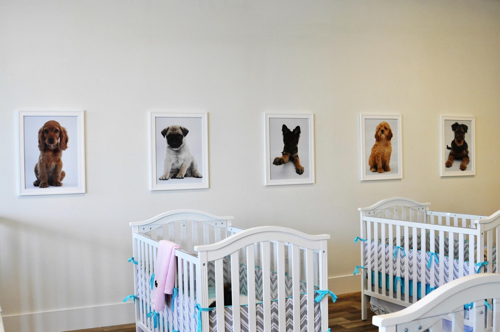 Baby cribs nashville tn - French Bulldog Puppies For Sale Nashville Pug Puppies For Sale Nashville Goldendoodle Puppies For Sale Nashville Akc Puppies For Sale Nashville