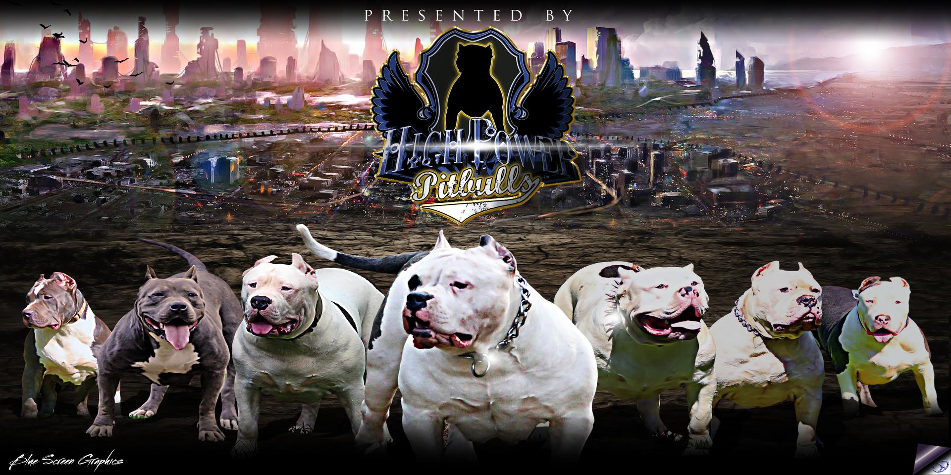 high power pitbulls xxl bullies home page