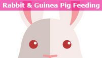 katie's pet services - rabbit - guinea pig feeding - dog walking walker brighton kemp town