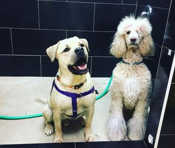 Grooming our richmond store also features a self serve dog wash available wednesday monday solutioingenieria Choice Image