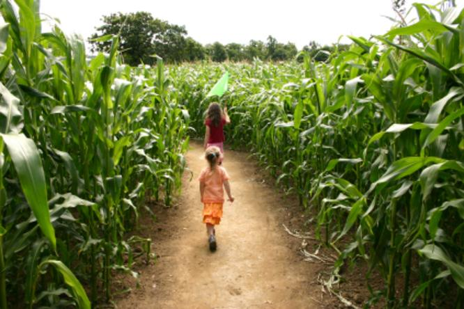 Corn Maze And Haunted Houses