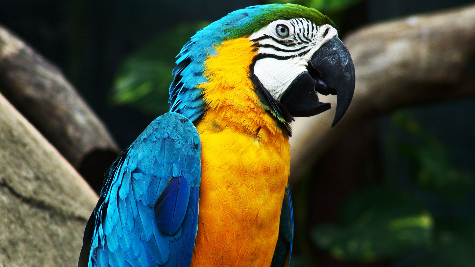 parrot rescue bird rescue wings of love parrot rescue of the