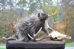 Backwoods Taxidermy