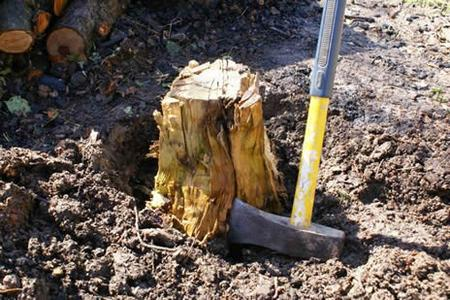 Excellent Tree Stump Removal Service in Lincoln NE | LNK Junk Removal