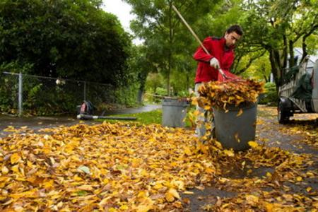 Leaf Removal Leaf Cleanup Yard Debris Removal Fall Leaf Removal Service and Cost in Omaha NE | Omaha Junk Disposal