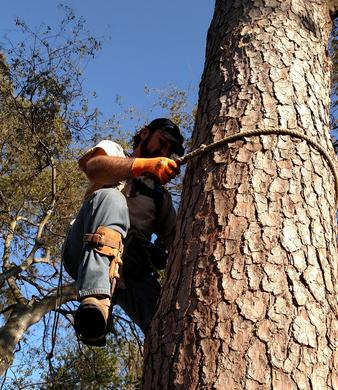 Augusta Tree removal b and w tree service