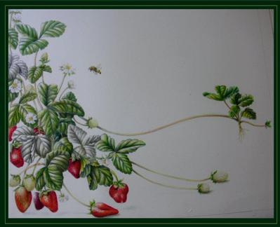 Botanicals, Trailing Strawberries, Colour Pencils