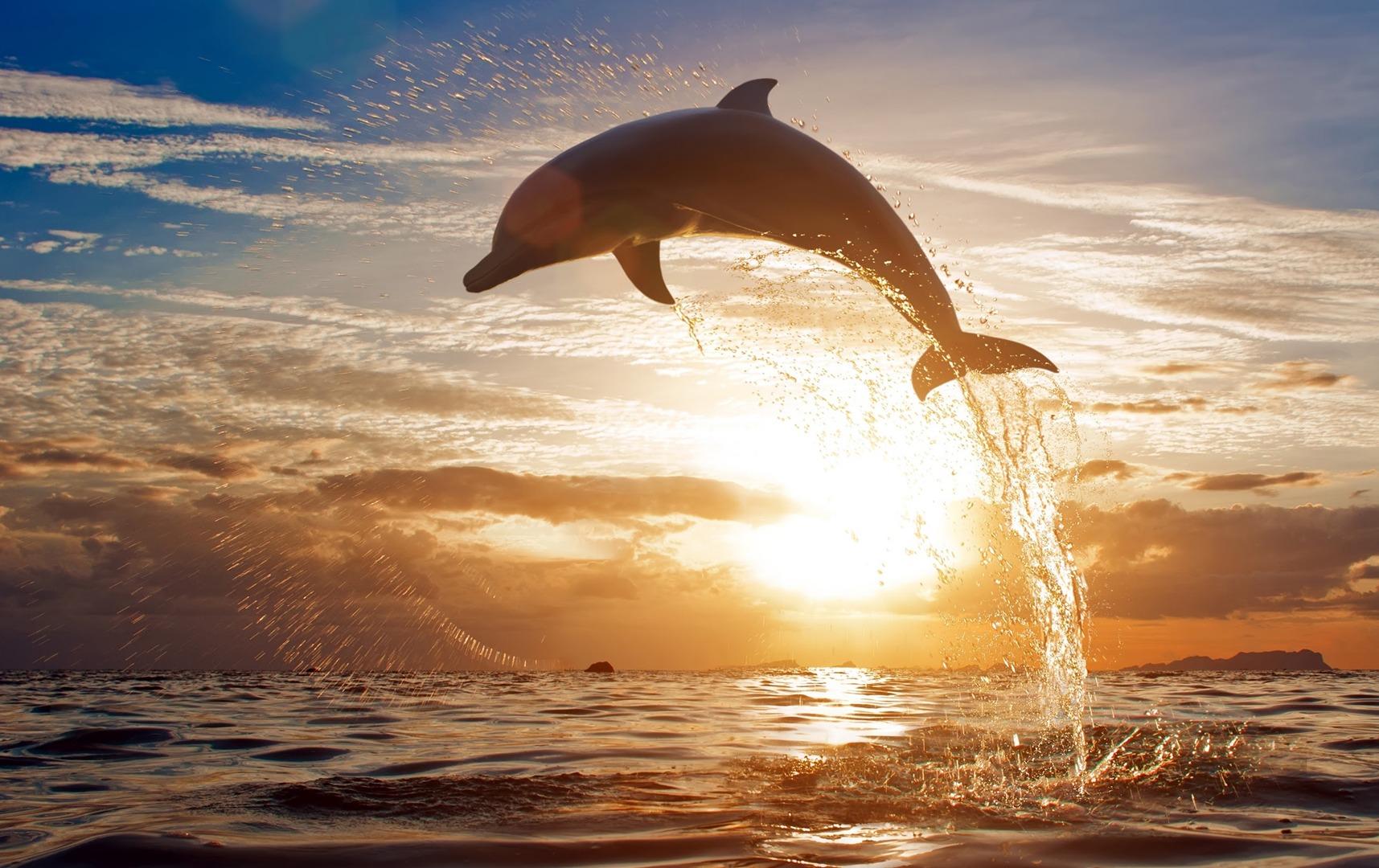 Island Time Dolphin Shelling Sunset Cruises