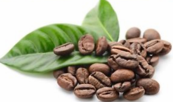 Coffee Beans infused into oils for hydration and healing