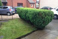small hedge cut