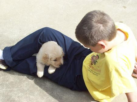 Boy with golden retriever puppy climbing on him