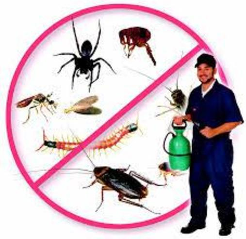 BUGS AND PEST CONTROL SERVICES IN EDINBURG MCALLEN TEXAS