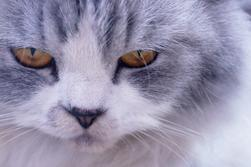 All you need to know about Persian cats!