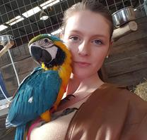 Blue and Gold Macaws Australia