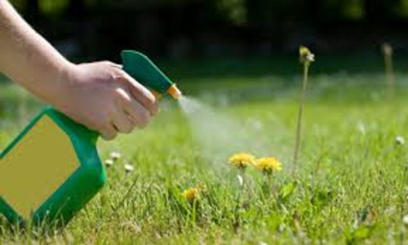 EXPERIENCED WEED CONTROL SERVICES EDINBURG MCALLEN TEXAS