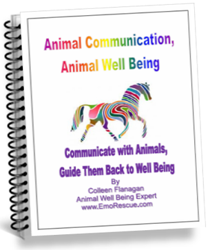 Free Animal Communication Ebook for Ezine Subscribers!