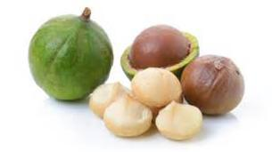 Macadamia Nut Fruit Tree Davie South Florida Broward
