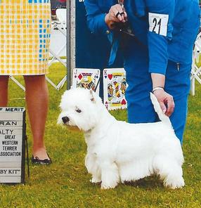 Home|San Francisco West Highland White Terrier Club| Valley