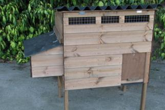 Stafford chicken coop and nesting box