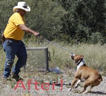Snake Avoidance Dog Training