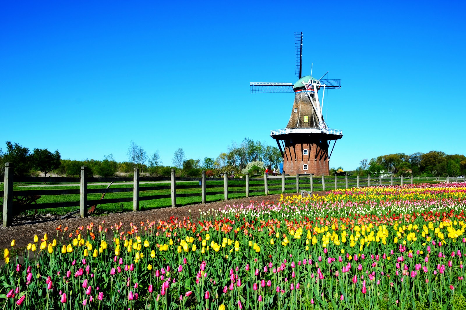 Mackinac Island Holland Tulip Festival Frankenmuth - Holland tulip festival